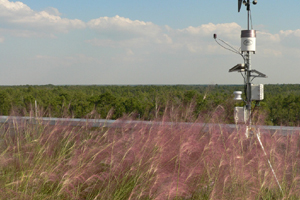 New Green Roof Tracks Weather at UCF
