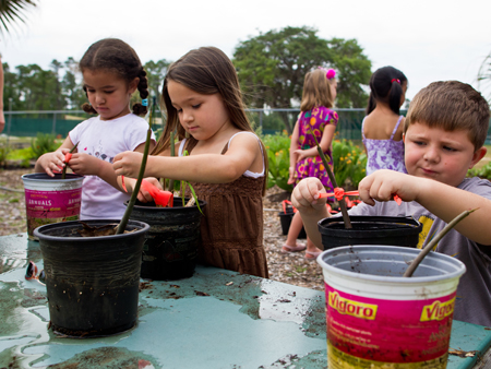 Pre-schoolers enrolled at UCF's Creative School for Children have been taking care of mangrove seedlings that will be planted at Turtle Mound this weekend.
