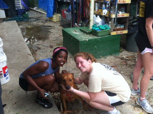 UCF Students Spend Spring Break Volunteering at Animal Shelter