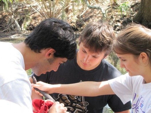 UCF Biologists Ask: Where Have the Snakes Gone?