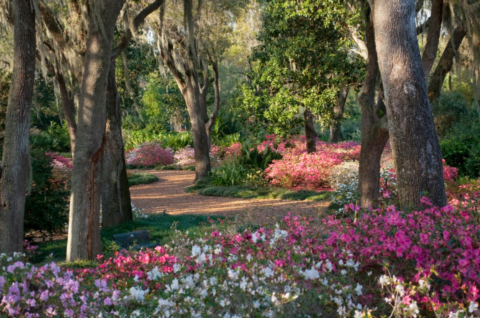Colleges In Tampa Florida >> Study Reveals the Root of Guest Experiences at Bok Tower Gardens - UCF News - University of ...