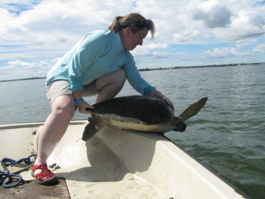 "UCF's Newest Sea Turtle Expert Studies ""The Lost Years"""