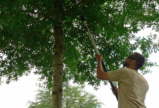 Plant Trees, Tend to Community Garden Friday, April 18