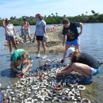 Volunteers Sought to Restore Eroding Shorelines, Help Oysters in Lagoon