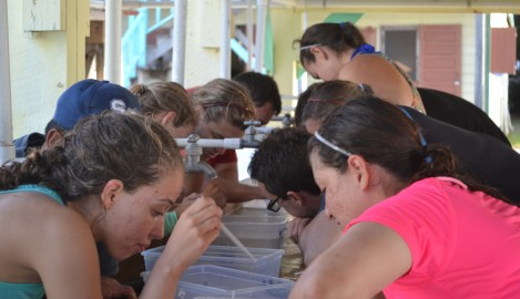 Swimming With Sharks, Turtles and Eels Part of UCF Summer Program