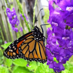 Garden Good Guys: Butterflies, Birds & Bees