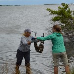 Oysters to the Rescue? A Natural Way to Clean Up the Indian River Lagoon