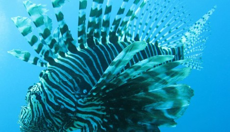 Workshop to Teach About Dangers of Invasive Lionfish