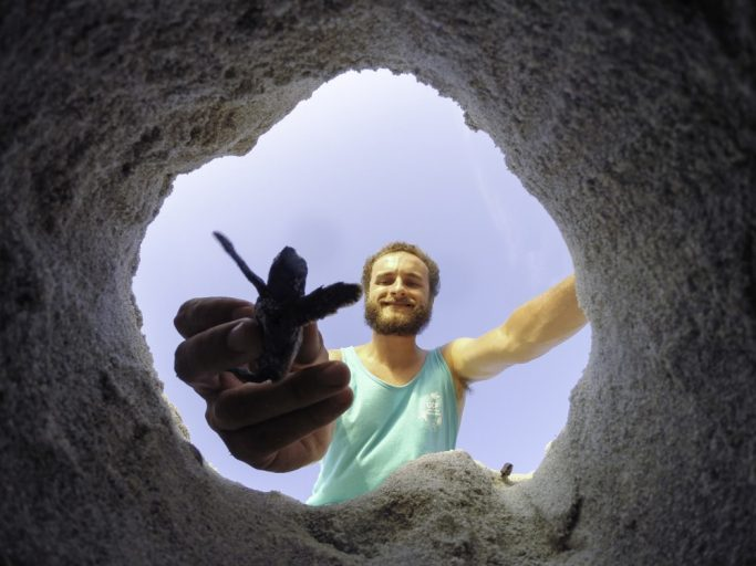 ucf student helping sea turtle out of sand hole