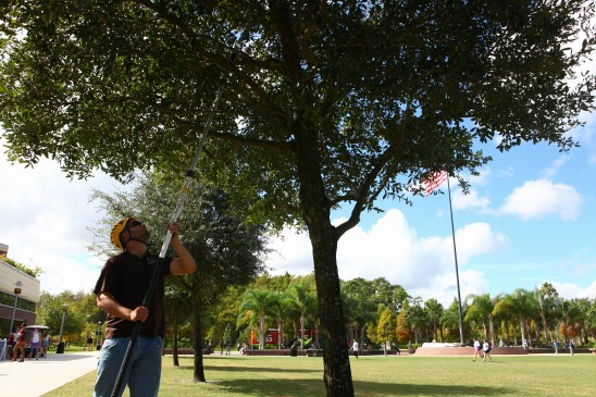 UCF Receives Tree Campus USA Recognition