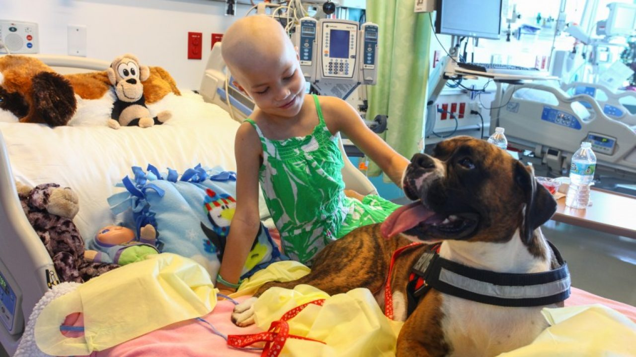 Therapy Dog Brings Smiles to Sick Children, Medical Students