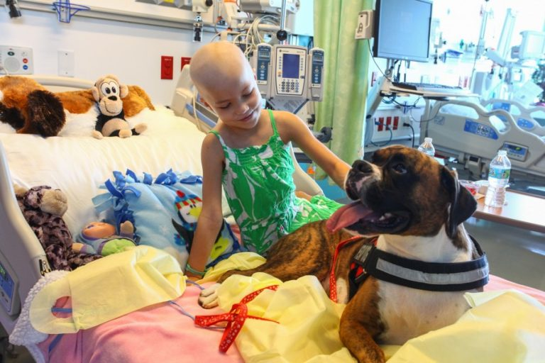 At Nemours Children's Hospital, Palmer Vorkapich lights up during a visit from Ion, a therapy dog owned by College of Medicine student Christa Zino.