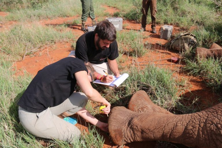 Biology student Matthew Rudolph writes down information about one of the elephants being tracked in Kenya.