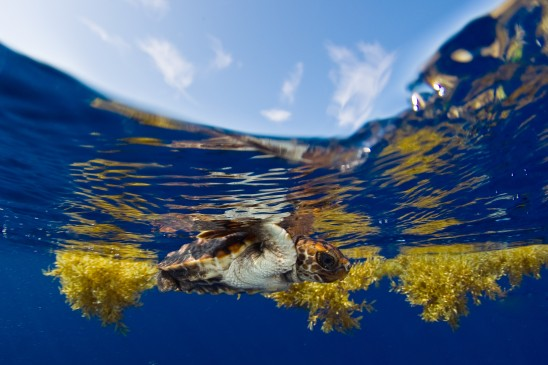 UCF to Establish Permanent Sea Turtle Research Field Station on Archie Carr National Refuge