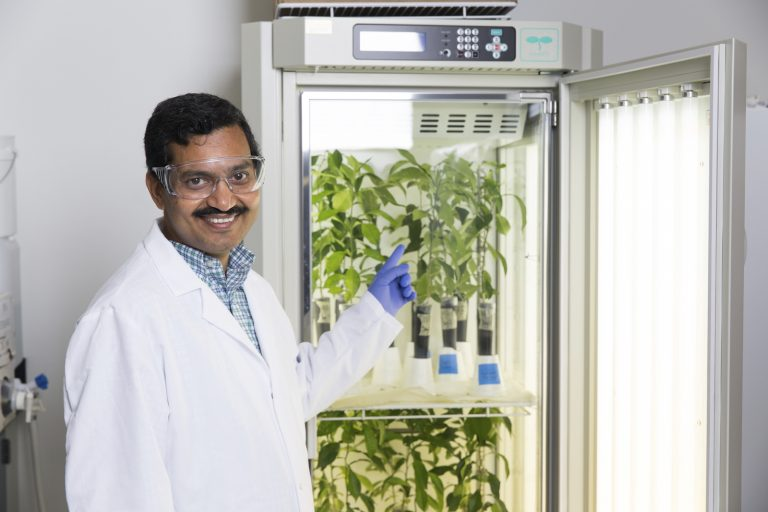 University of Central Florida Associate Professor Swadeshmukul Santra's technology for fighting crop disease has been licensed by an agricultural company.