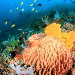 Undersea Life Holds Promise for Killing Tuberculosis