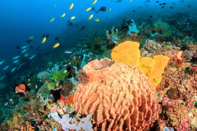 Sponges and colorful tropical fish on a coral reef