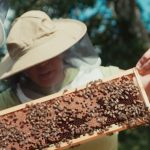 Helping Honeybees Thrive on Campus