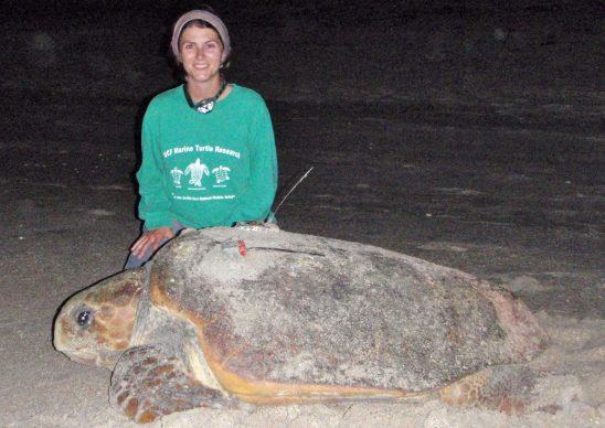 Important Foraging Hotspots for loggerhead Turtle Rookery Identified
