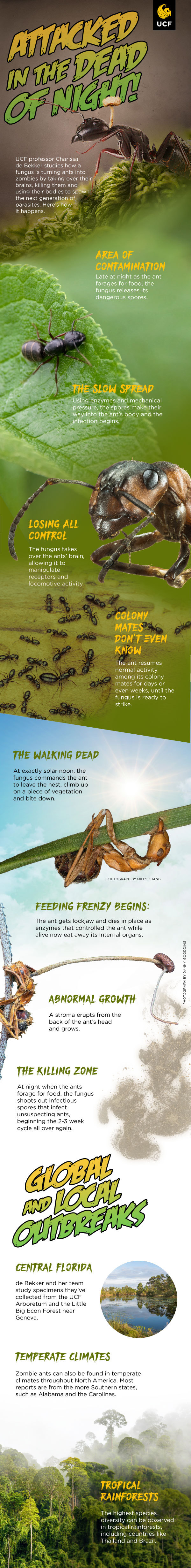 zombie ant infographic, titled 'attacked in the dead of night'