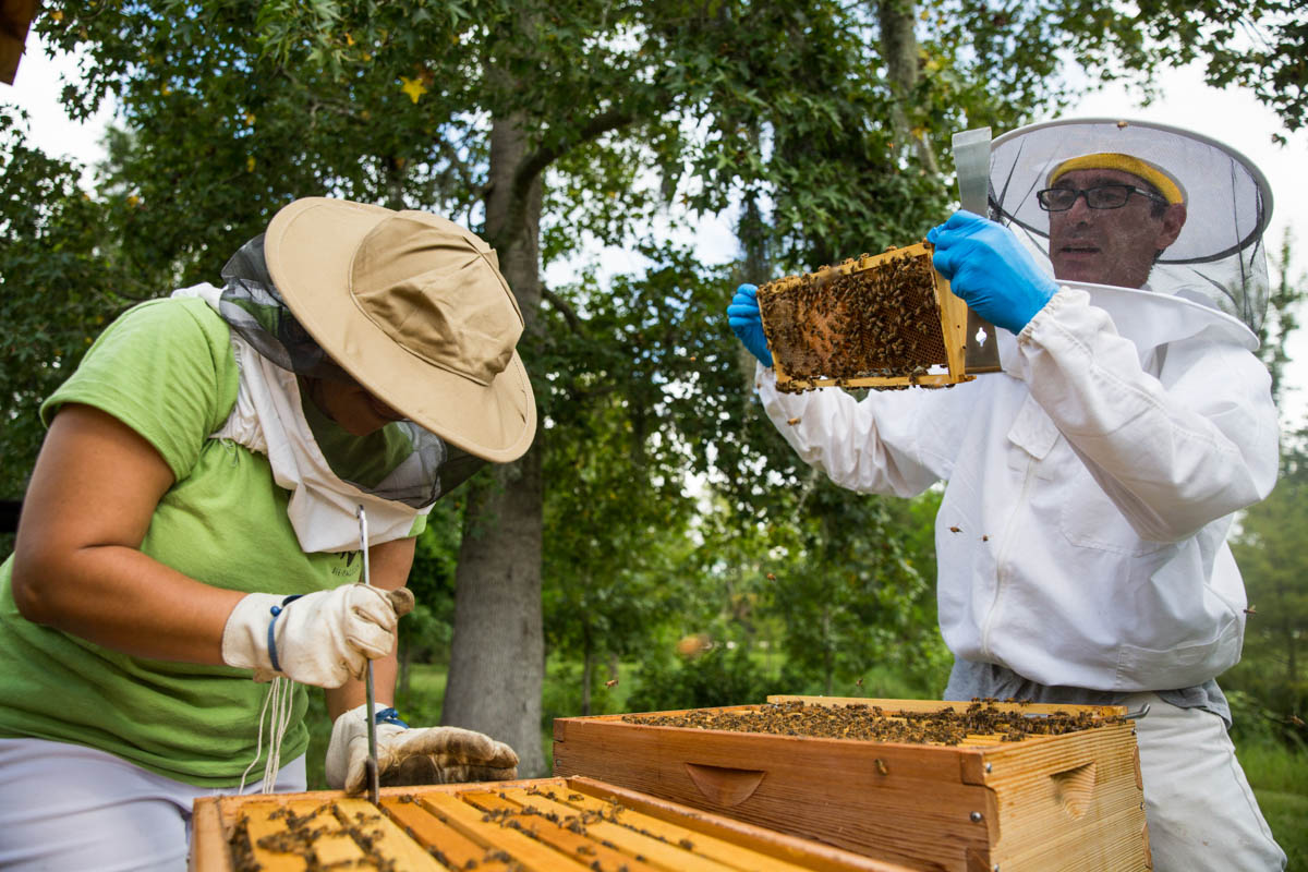UCF's Arboretum Director Patrick Bohlen works with a student to inspect one of the three honeybee hives that were placed on campus last year. (Photo by Nick Leyva)