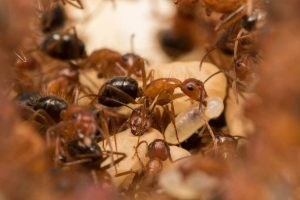Feed image for The Science Behind Zombie Ants