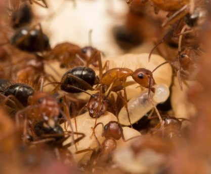 The Science Behind Zombie Ants