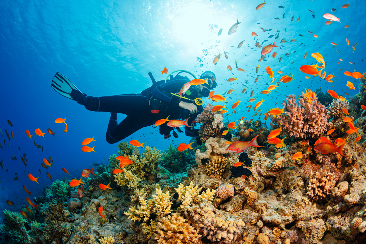 scuba diver in the deep blue sea, with brightly colored fish swimming around a coral reef