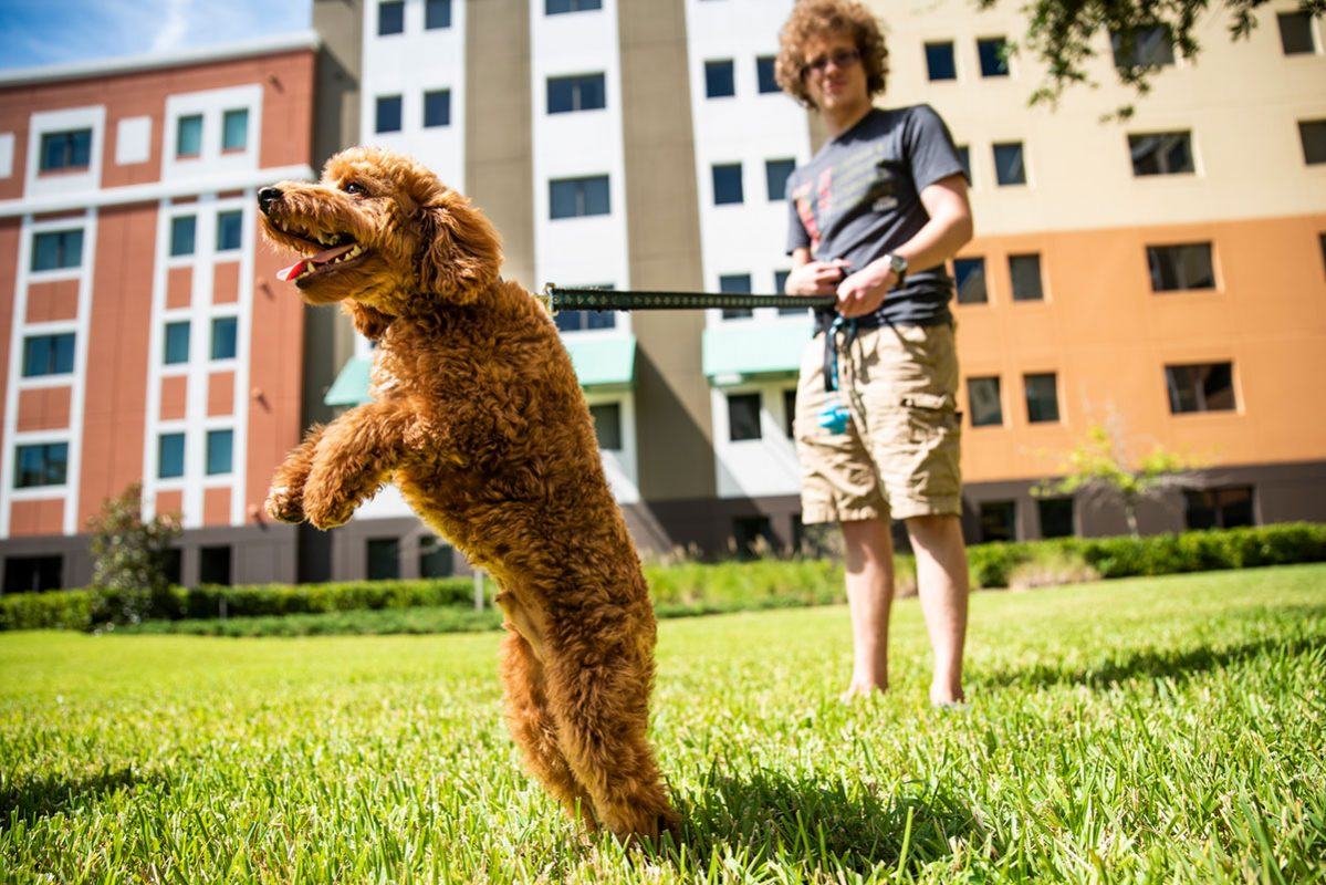 Photo of dog and UCF student in front of dorms