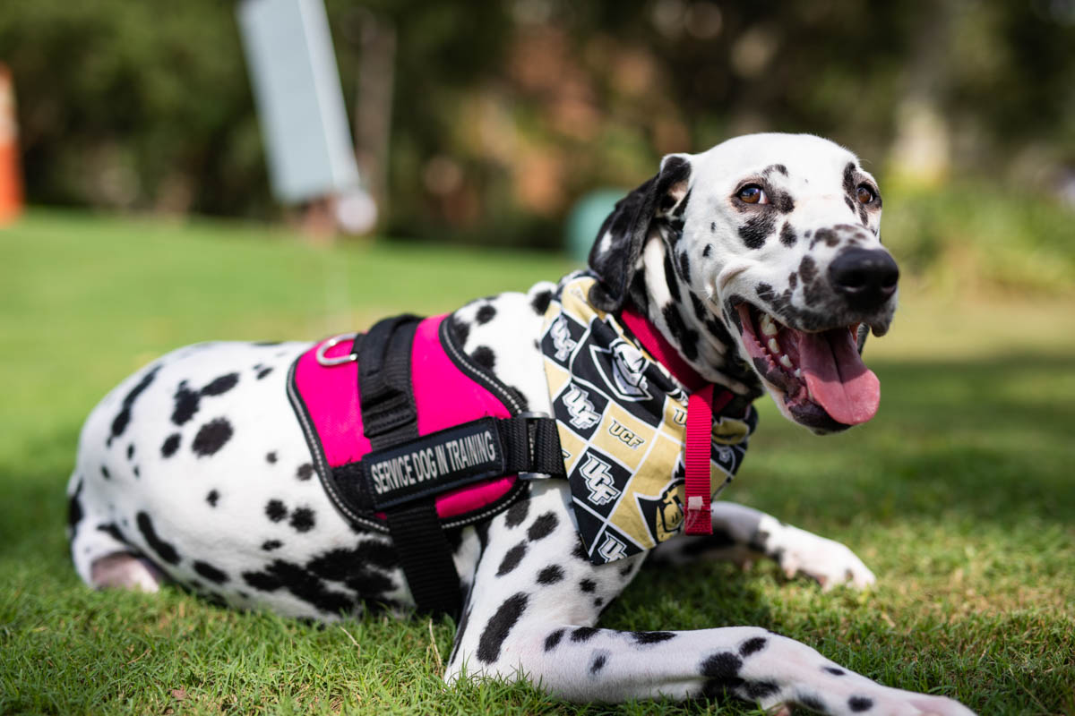 Bruno says one of the things she loves most about her 2-year-old dalmatian Paisley is how much she smiles, a trait that is common in the breed.