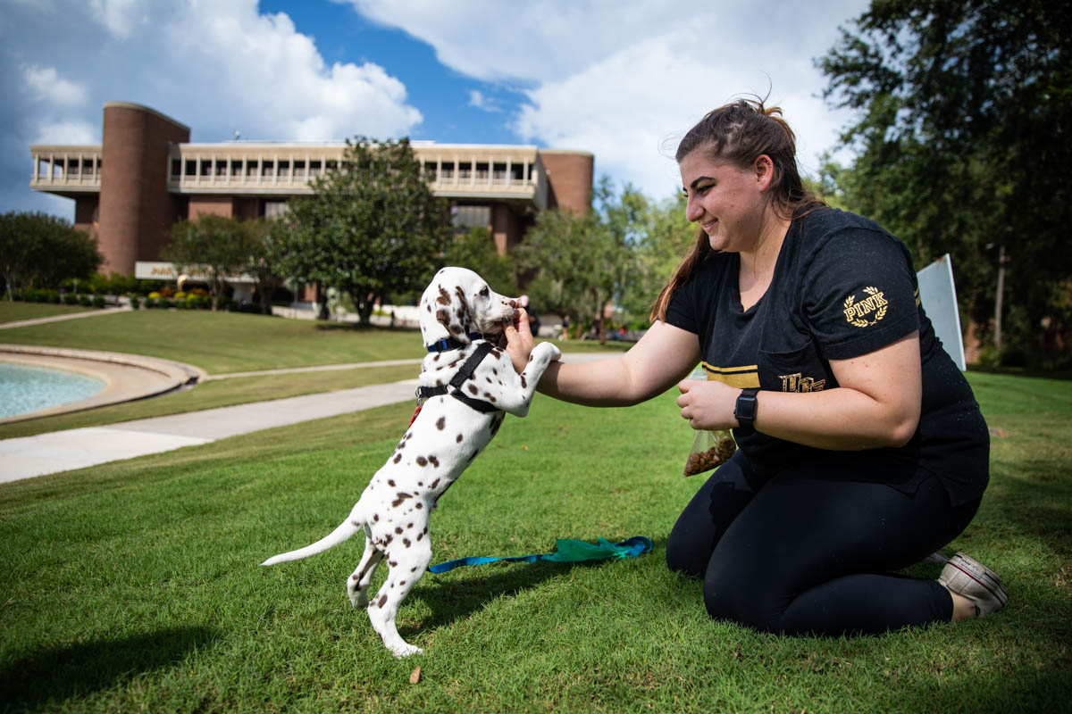 Nine-week-old Chevron performs a trick in return for a treat during a training activity with Bruno near the Reflecting Pond