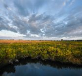 UCF, Conservation Florida Join Forces to Protect Natural Lands