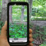 UCF Partners with Carnegie Museum on Augmented Reality App That Brings Gardens to Life