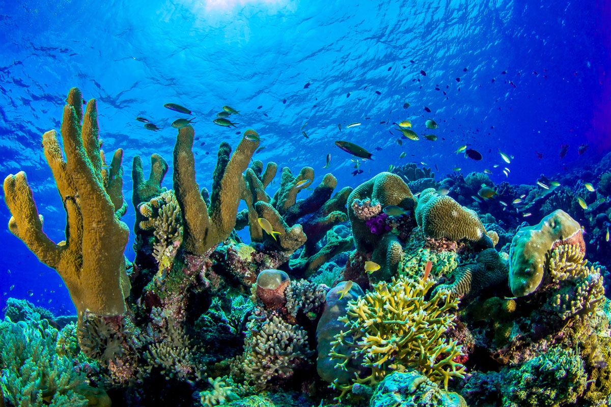 underwater photo of coral reef and fish