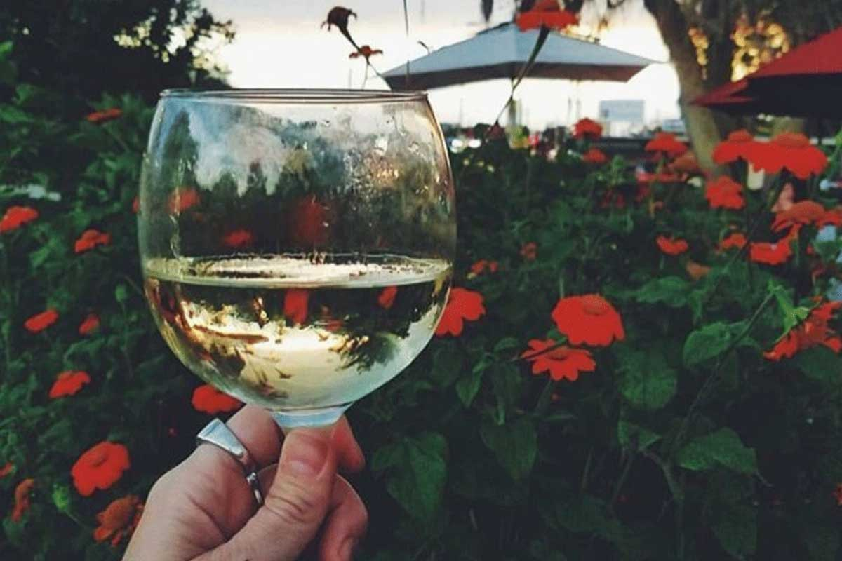 hand holds wine glass in front of rose bush