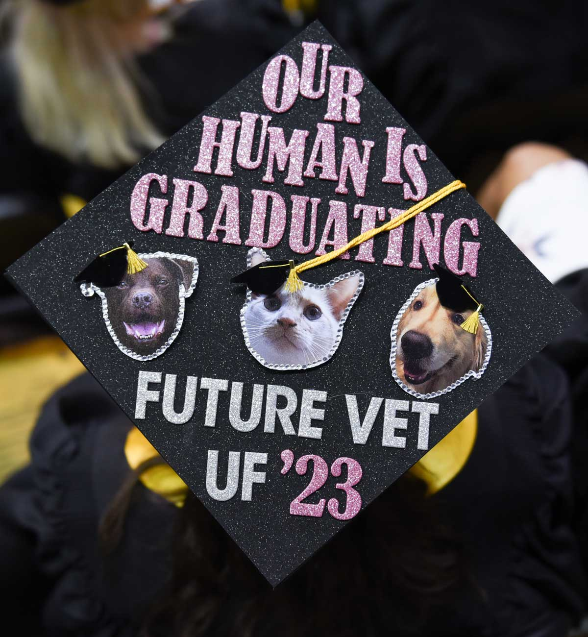 Grad cap decorated with photos of three animals and text: out human is graduating
