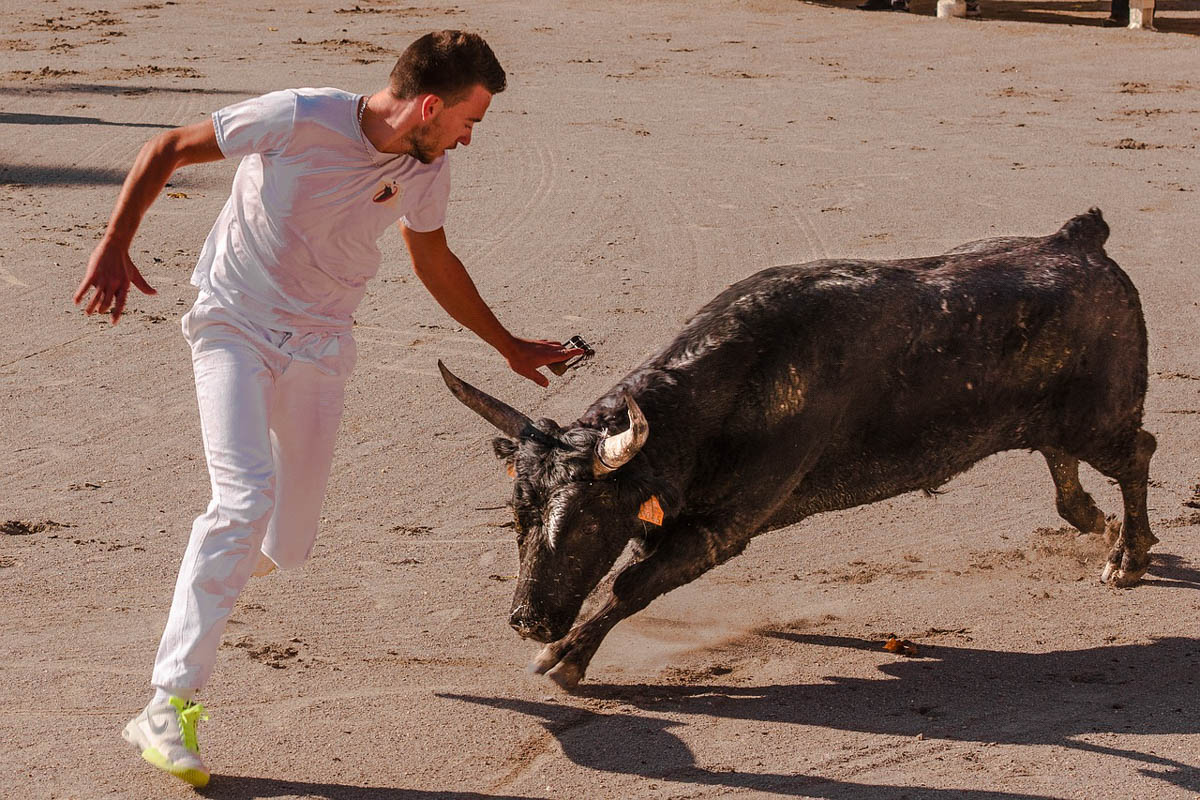 Man running from a bull