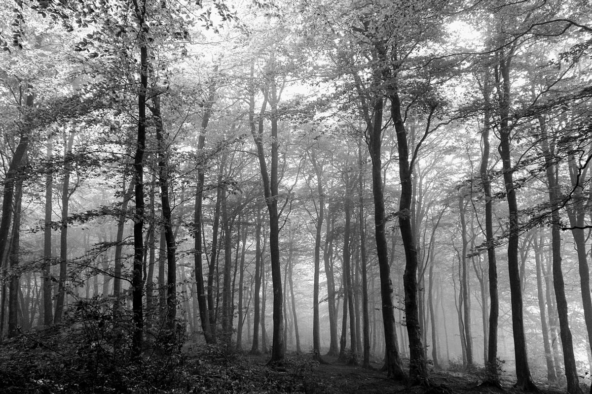 black and white photo of woods