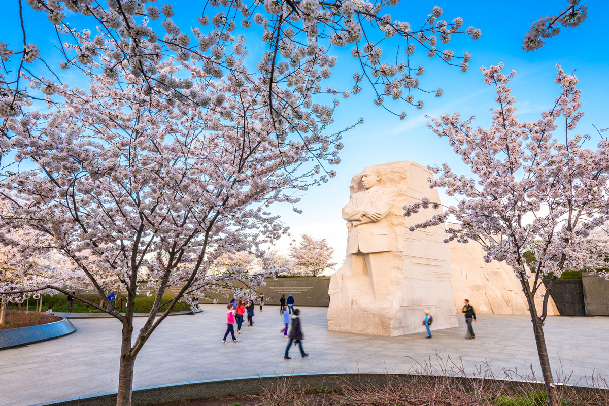 MLK monument in Washington D.C. with cherry blossom trees in the forefront