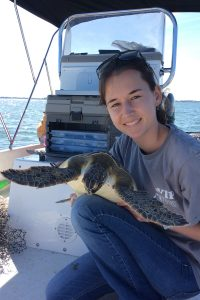 Study Examines Leeches for Role in Major Disease of Sea Turtles in Florida