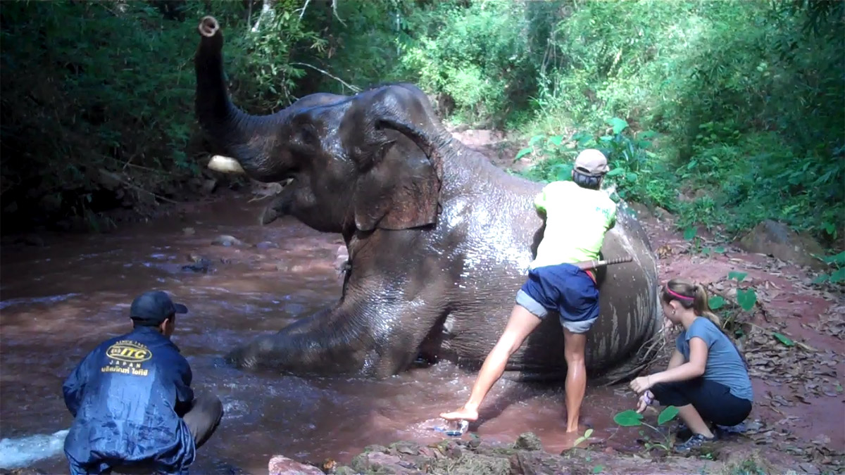 My-niece-bathing-an-elephant-in-Laos