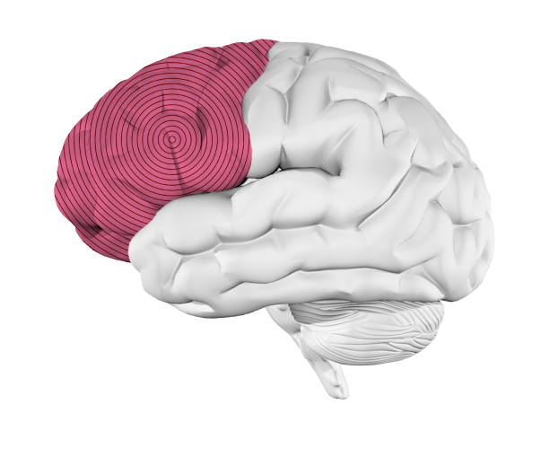 Frontal Lobe Diagram.Music And The Brain What Happens When You Re Listening To Music