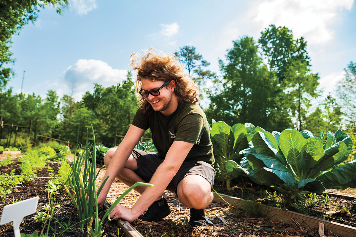 Andre Simoes pulls some weeds while gardening at the UCF Arboretum.