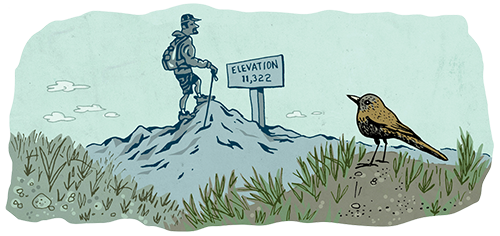 An illustration of a hiking on a trail