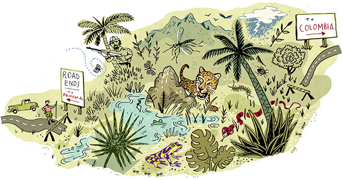 An illustration of a jungle