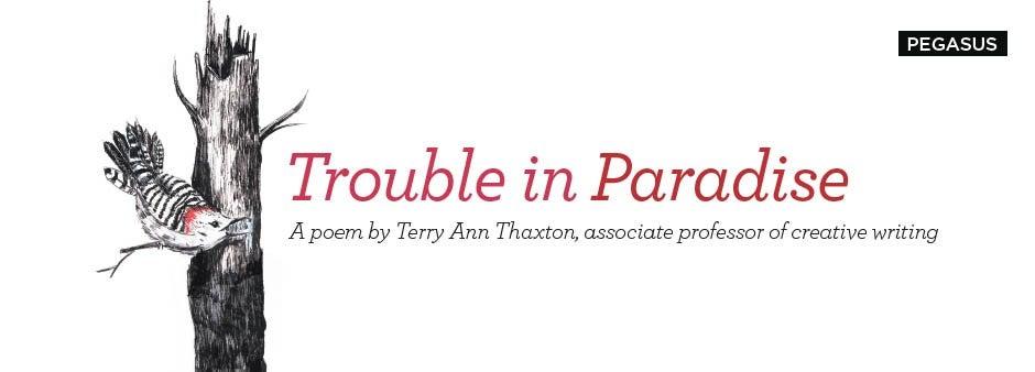 Pegasus Spring 2015: Trouble in Paradise